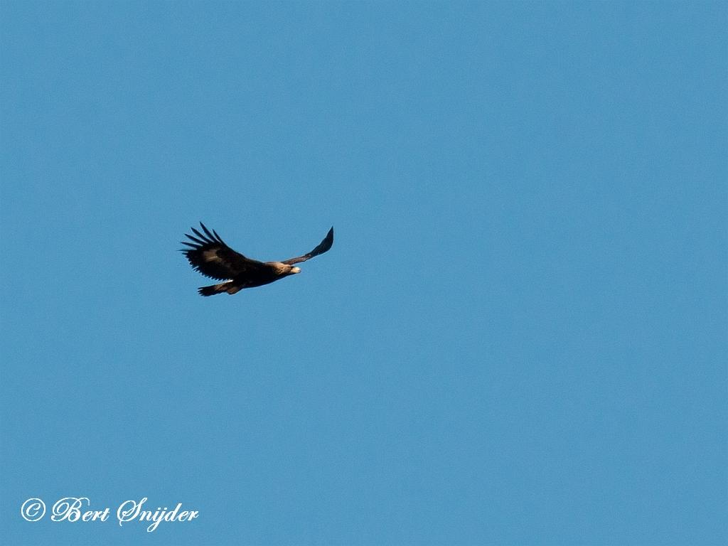 Steenarend Vogelreis Portugal