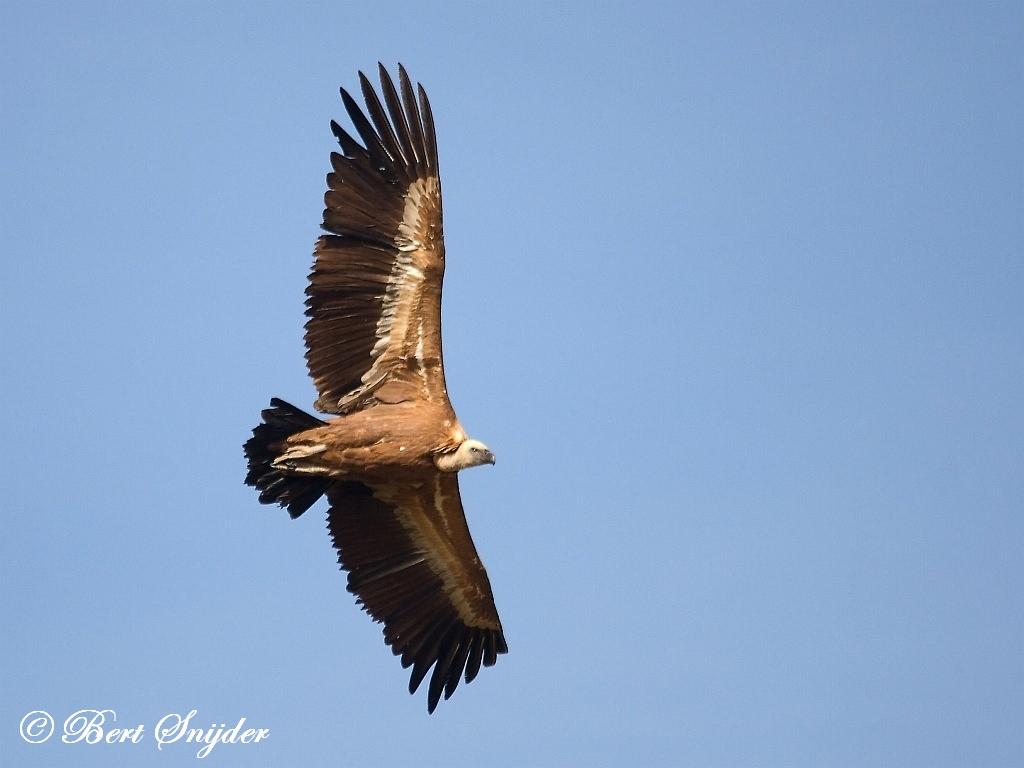 Vale Gier Vogelreis Portugal