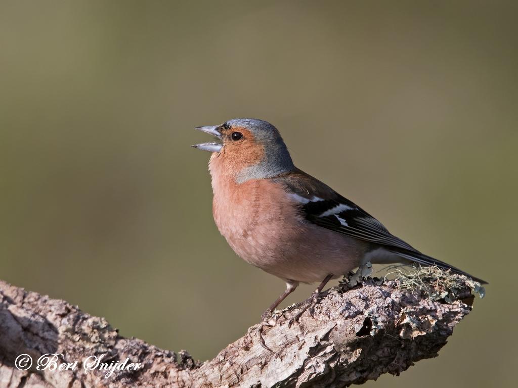 Vink Vogelreis Portugal