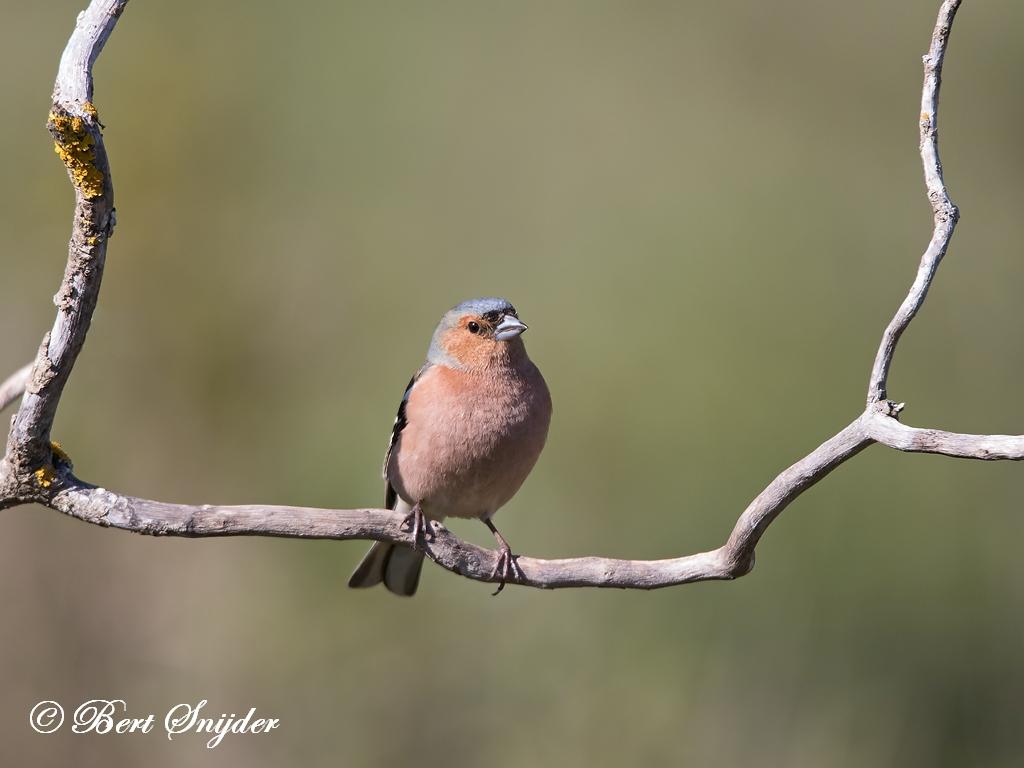 Vink Vogelvakantie Portugal
