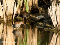 Waterral Vogelreis Portugal