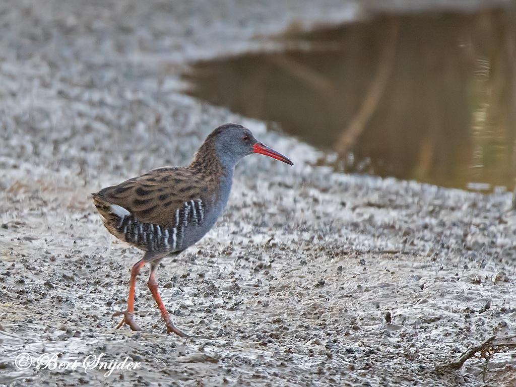 Waterral Vogelvakantie Portugal