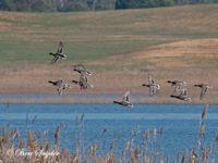 Wilde Eend Vogelkijkhut BSP2 Portugal