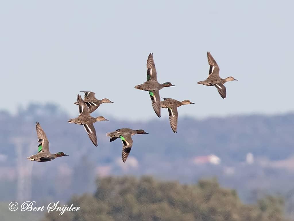 Wintertaling Vogelkijkhut BSP2 Portugal