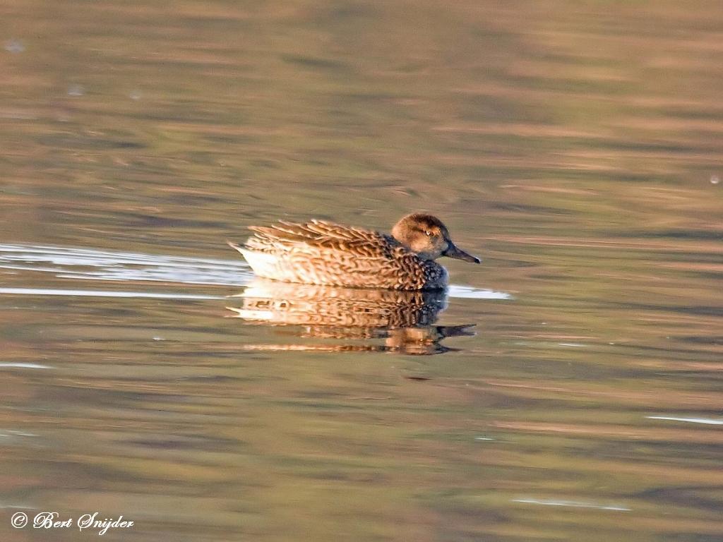 Wintertaling Vogelreis Portugal