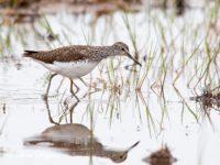 Witgat Vogelvakantie Portugal